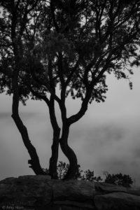 tree silhouette image