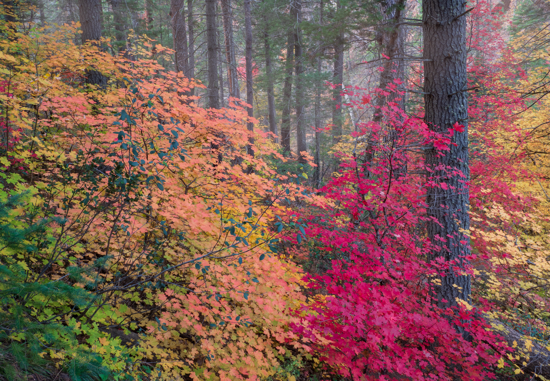 Photographing Fall Colors in Westfork
