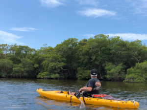 Kayaking near mangrove trees
